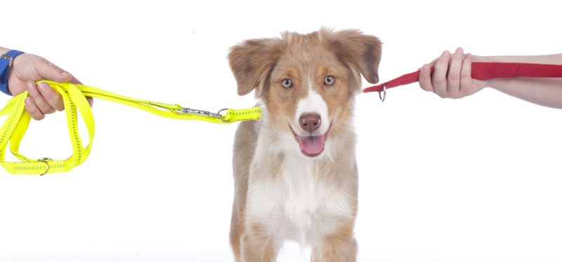 Our Fayetteville divorce attorneys discuss pet custody laws in North Carolina.